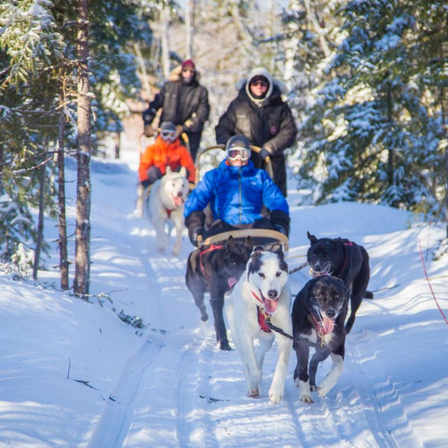 Dog sled - New Brunswick Canada